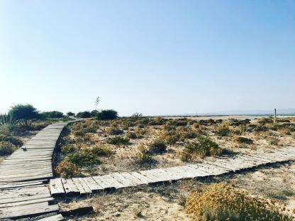 desertisland3