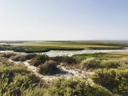desertisland4